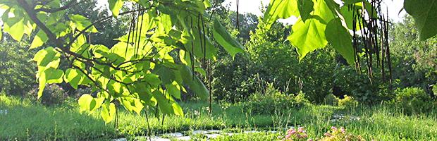 IMG_0579_лиственные деревья