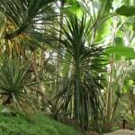 Интерьер оранжереи