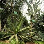 Растения пустынной Мексики