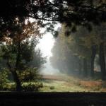 Туман на боковой алле